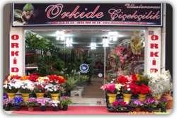 Rize ORKİDE  Çiçekçilik Rize ORKİDE Çiçekçilik